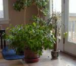 Растения в интерьере помещения.