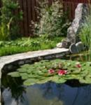 Как устроить пруд на дачном участке