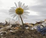 Воспитание экологической культуры у детей